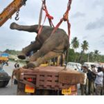529 (Country: India)Elephant seriously hurt after being hit by bus