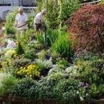 670 Gardening could be the hobby that helps you live to 100